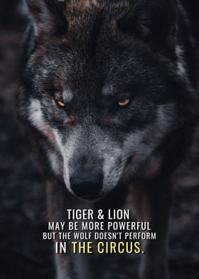 Wolf does not perform