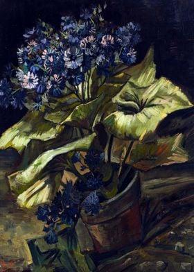 Van Gogh Cineraria