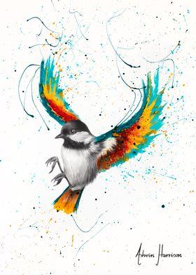 Solo Sounds Bird