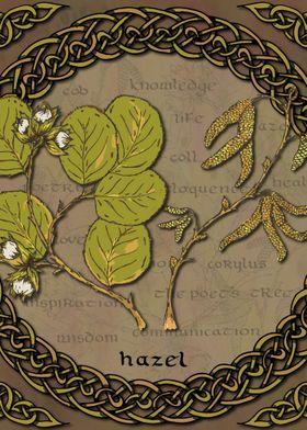 Celtic Hazel