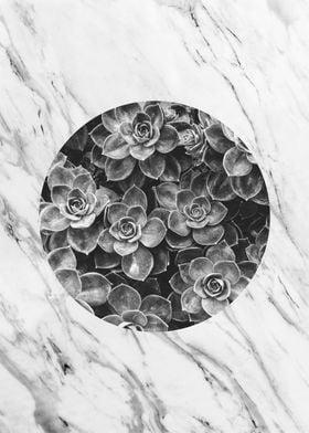 botanical polygon V