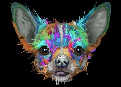 Chihuahua Splash
