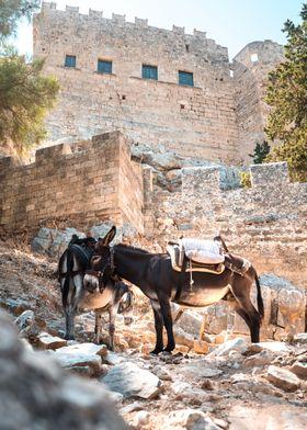 A donkey in greece