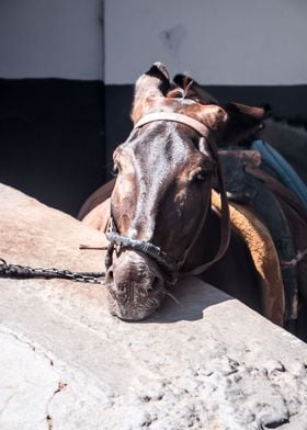 A tired donkey