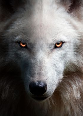Angry Wolf Face Red Eyes Metal Poster Mk5 Studio Displate