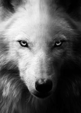 black wolf face red eyes