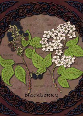Celtic Blackberry