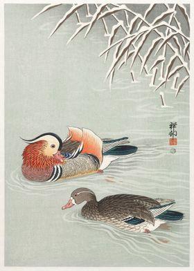 Japanese duck