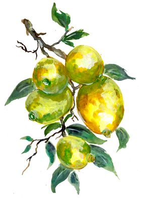 Lemon Fruits on Tree