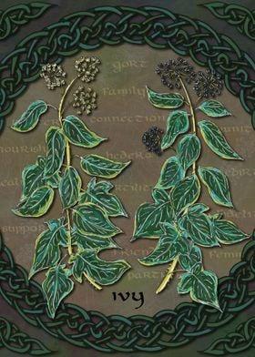 Celtic Ivy