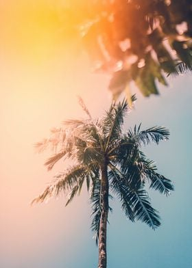 tropical summer sun