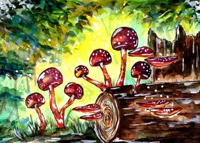 Red Mushrooms in Forest