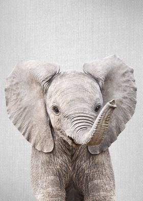 Baby Elephant Colorful