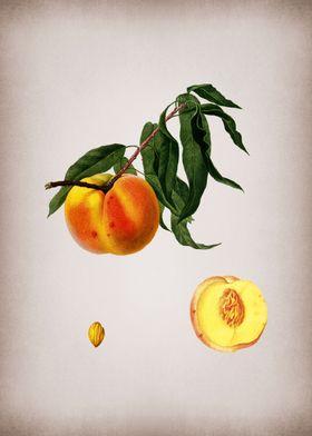 Vintage Peach Fruit Art