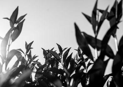 monochrome leaves 2