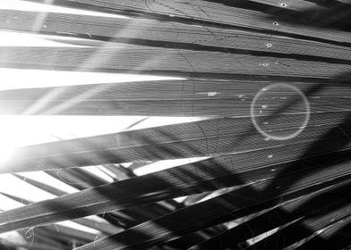 Sun flare Palm Leaf