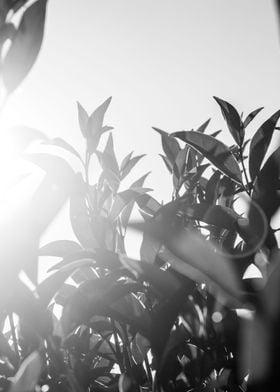 monochrome leaves 1