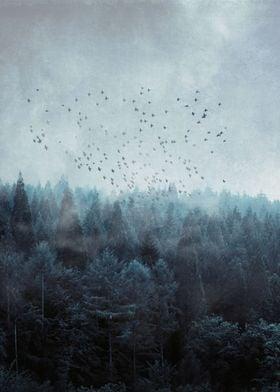 Birds Over Misty Forest