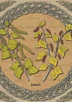 Celtic Birch