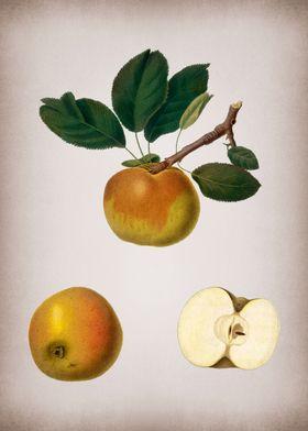 Botanical Illustration Art