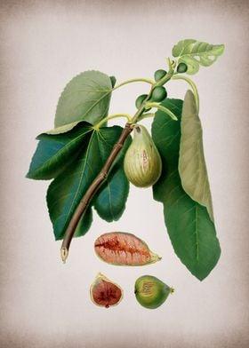 Vintage Monaco Fig Fruit