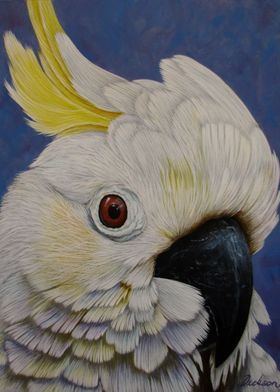 Cockatoo Portrait Painting