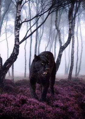 Big black panther cat