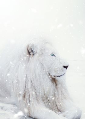 White Lion King Winter