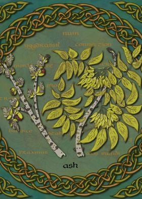 Celtic Ash Tree