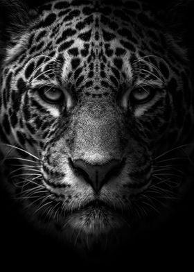 african leopard face black