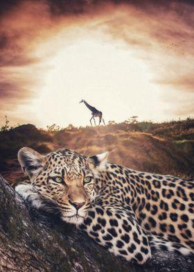 Jaguar and Giraffe savanna