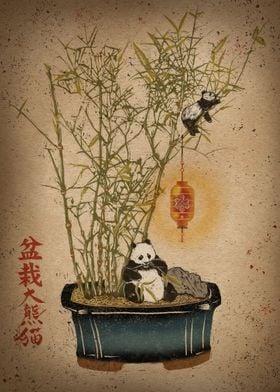 Panda Bamboo Bonsai