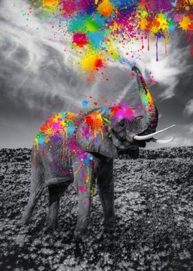 Elephant play paint Colors