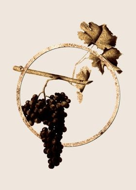 Gold Dolcetto Grapes Fruit