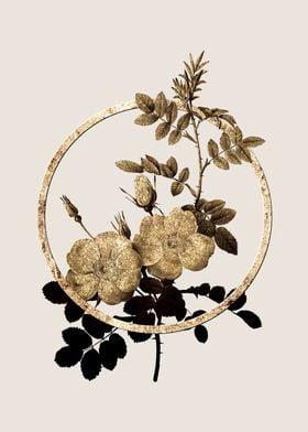 Gold Sweetbriar Roses