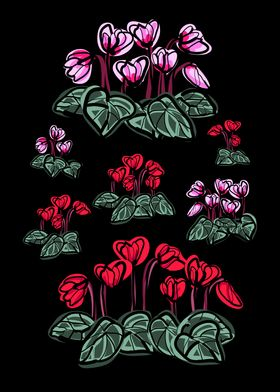 Cyclamen blossom