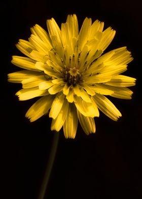 Flower Floral Botanical