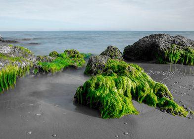 Beach rocks green algae