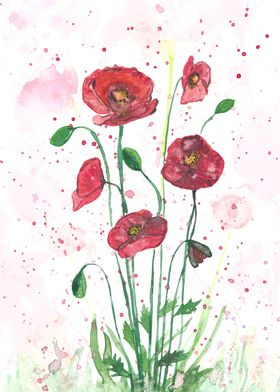 The beauty of red poppies