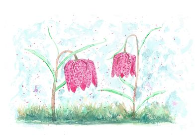 Wildflowers Fritillaria m