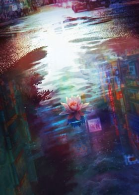 White Lotus on The Puddle