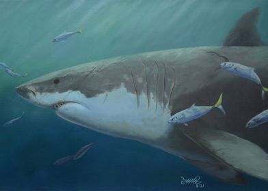 King of Sharks