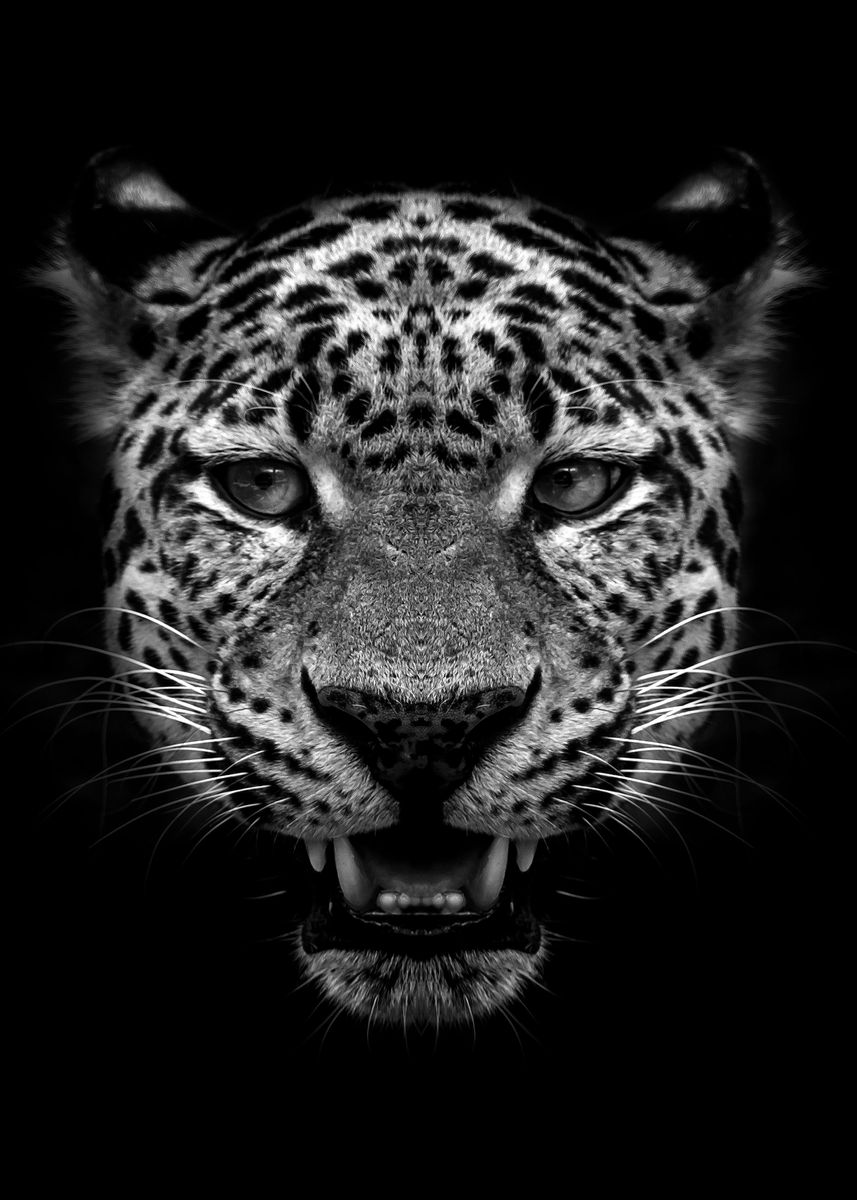 Jaguar Face Black Poster Metal Poster Mk Studio Displate