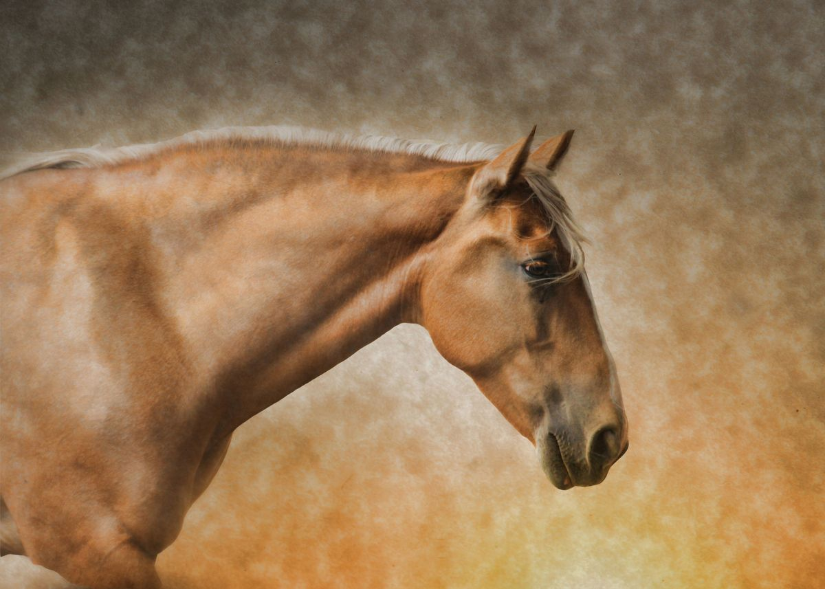 Pretty Palomino Horse Metal Poster Print Stephanie Laird Displate